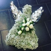 Gypsophila Angel